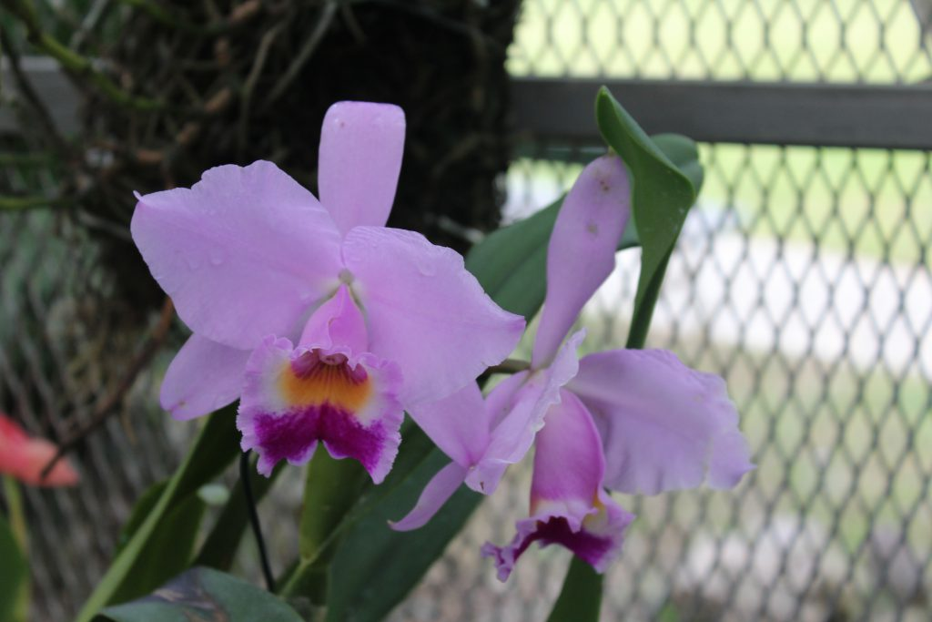 Jardim Botanico, Botanical Garden Rio de Janeiro, Brazil, Orchideario, Orchid, Orchid Farm, things to do in Rio de Janeiro, Brazil, flora